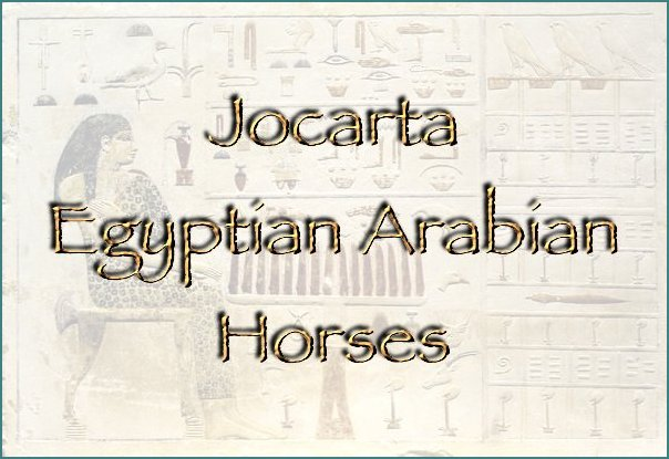 Welcome to Jocarta Eqyptian Arabian Horses